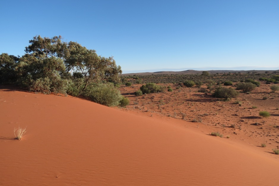 Outback landscape is completely varied, from creek beds to orange dunes.