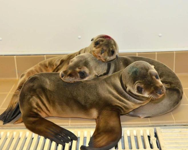 Pacific-Marine-Mammal-Center-