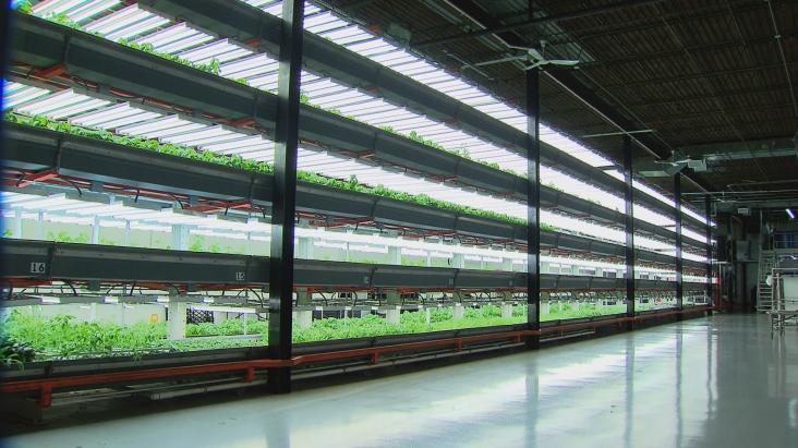v verticalfarming wttw0bzn transfer frame 678 Farming goes vertical