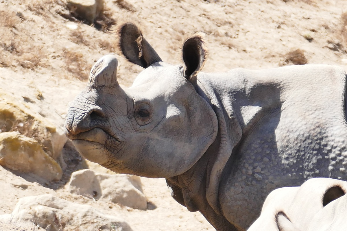 1380 Protecting endangered species