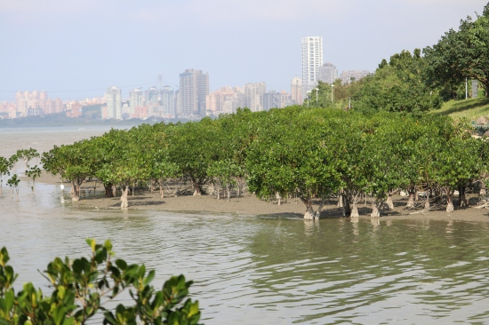 Hongshulin Nature Reserve — Xinbei City