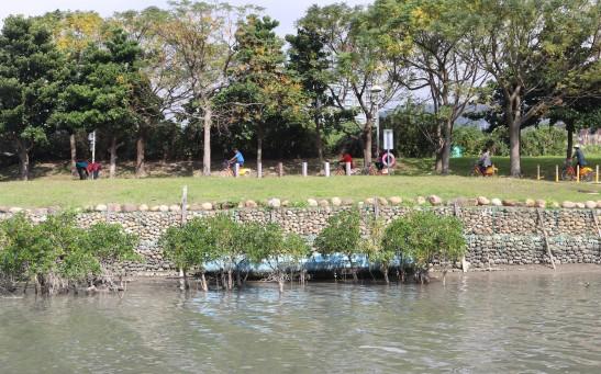 Trail above mangroves