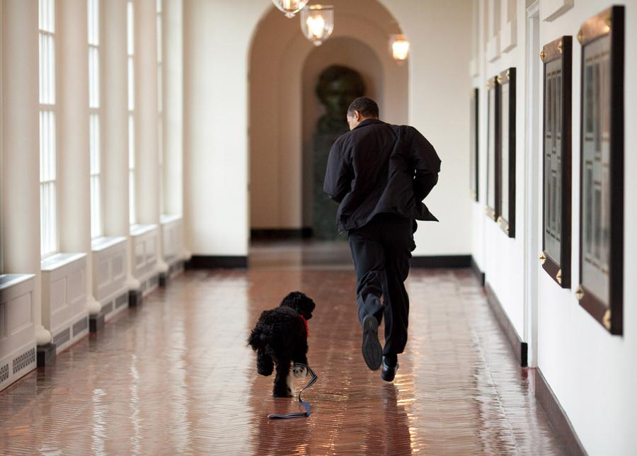 dog-obama