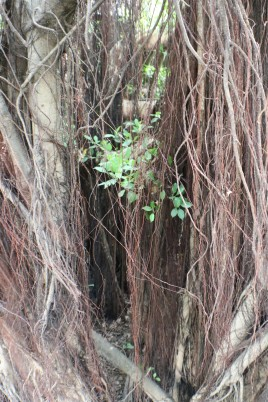12 dense beard Adventures in Tainan Tree House