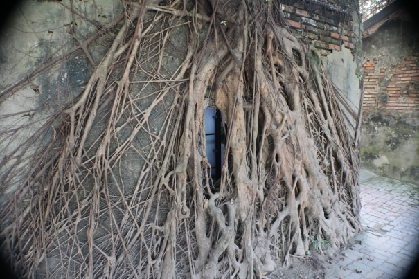 13 house devoured Adventures in Tainan Tree House