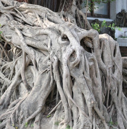18 sea monster Adventures in Tainan Tree House