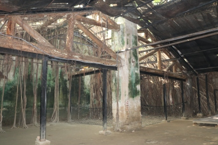 3 funky wallpaper Adventures in Tainan Tree House