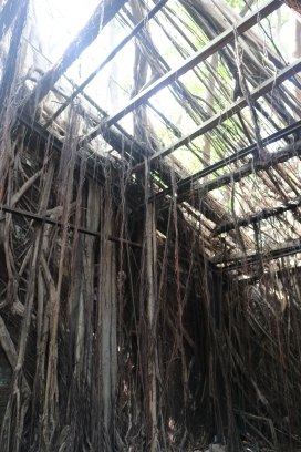 6 leaky roof Adventures in Tainan Tree House
