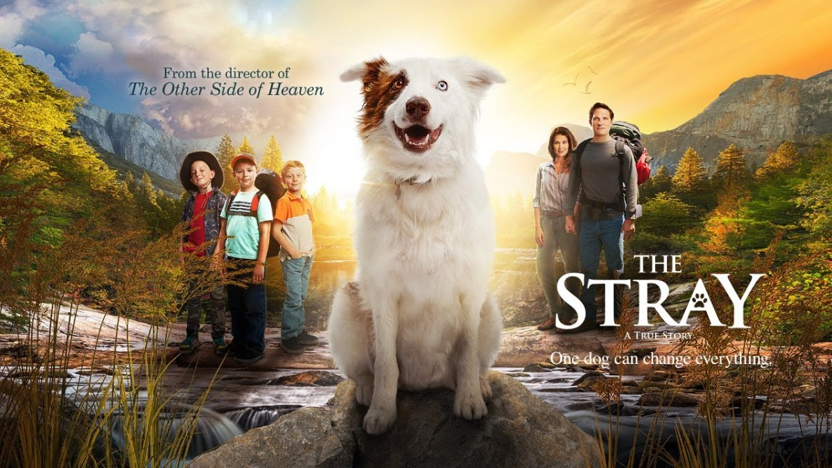 thestray Interview with the star of The Stray Michael Cassidy