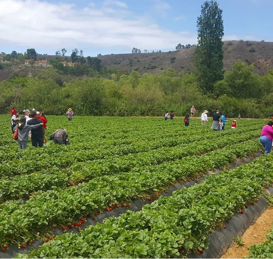 visit tanaka farms An escape from the city: Tanaka Farms in Irvine