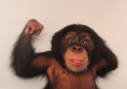 Photo Ark Monkey