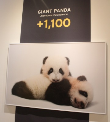 Photo Ark Pandas with words