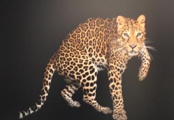 Photo Ark Tiger