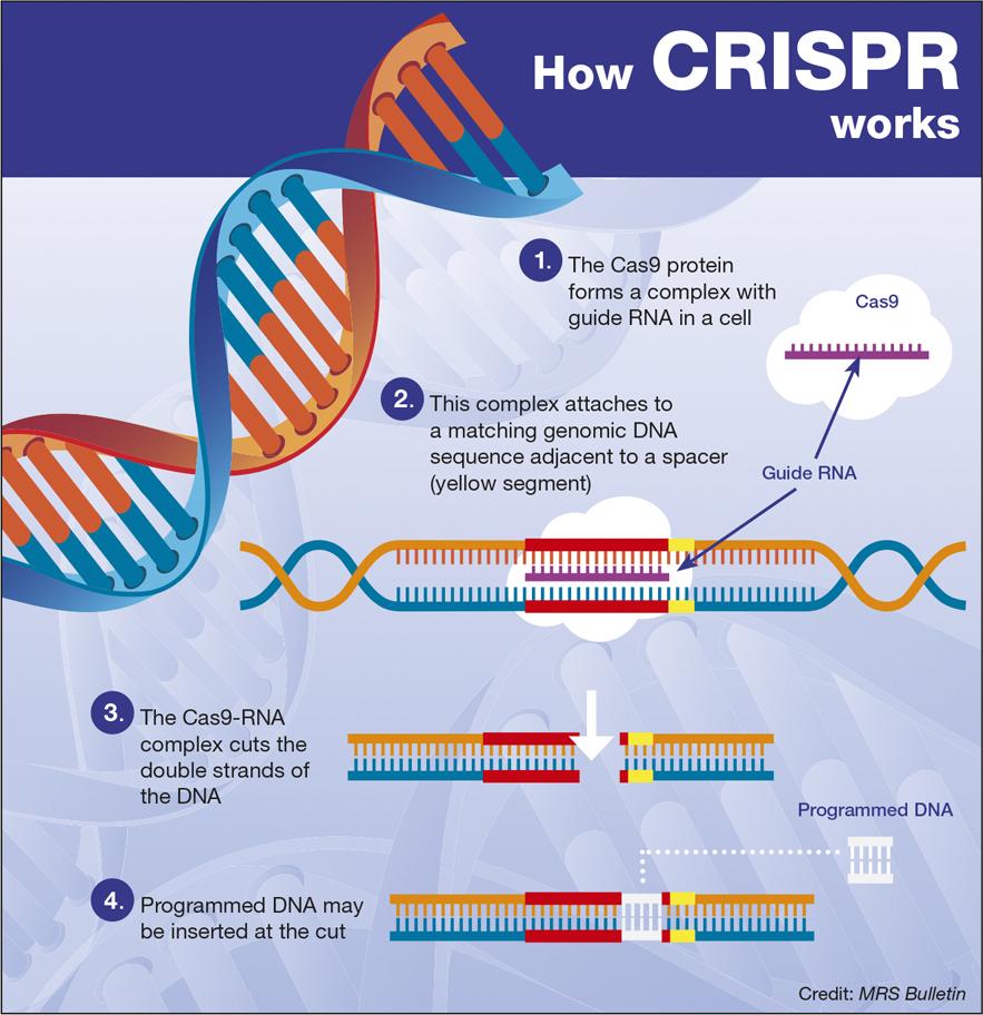 crispr 1 Genetic editing and ethics