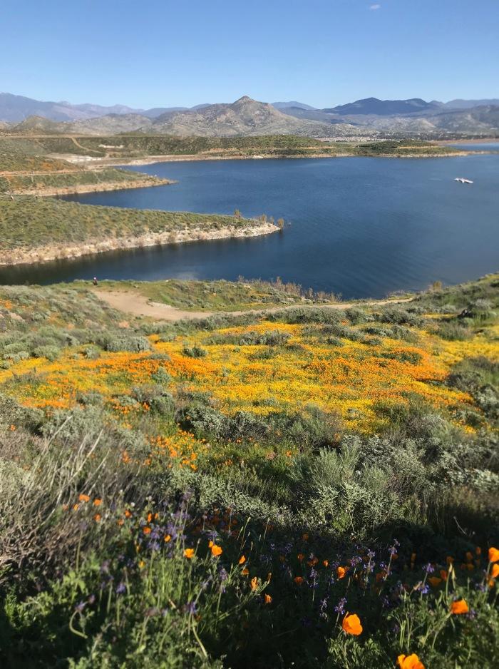 img 0561diamond valley lake Poem: Wildflower Trail at Diamond Valley Lake, Hemet