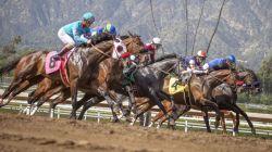 More horses die as racing continues