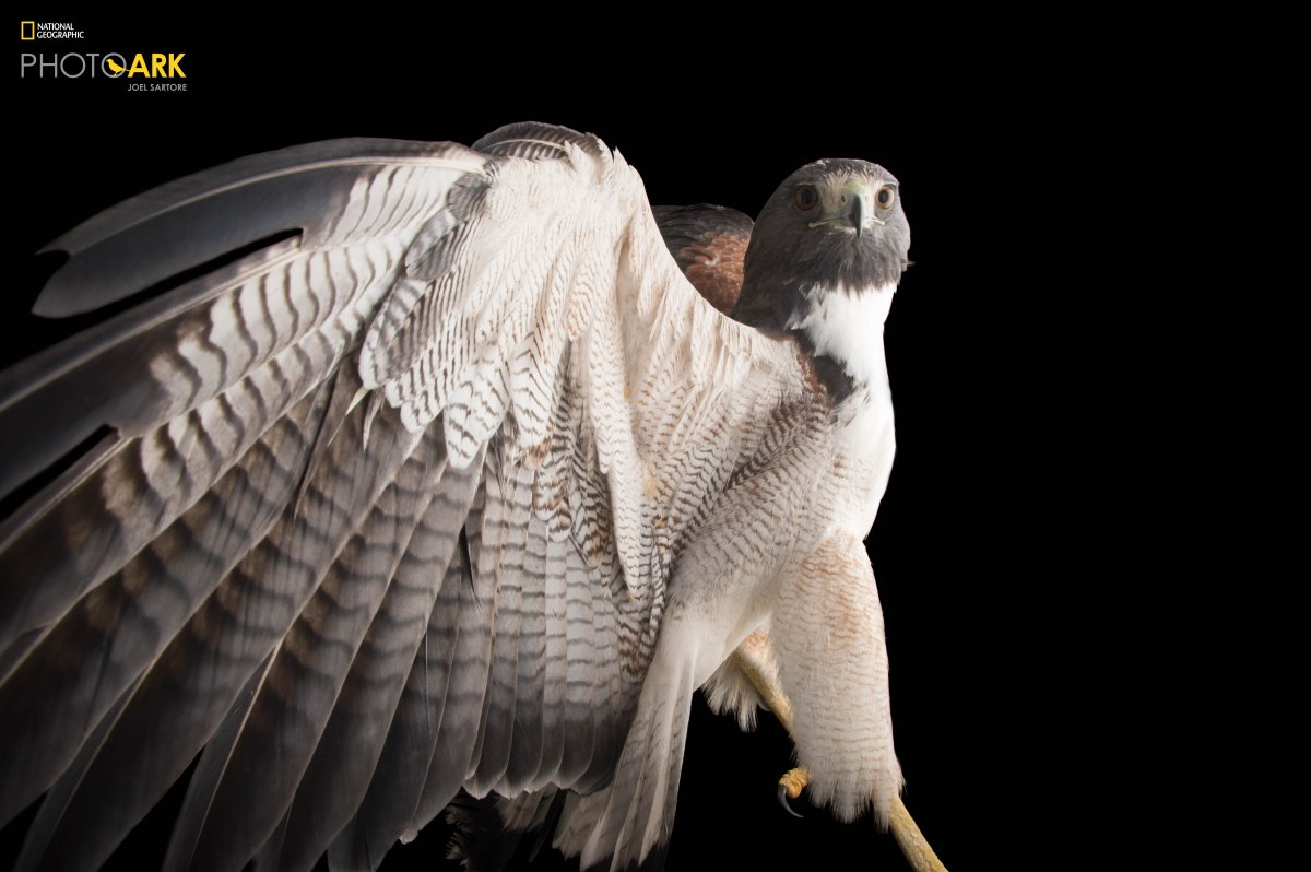 photoark nationalgeographic 2364383 Interview with Joel Sartore: Photographing every captive species of animal in the world for the Photo Ark